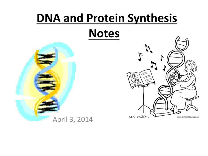 dna and protein synthesis notes n.