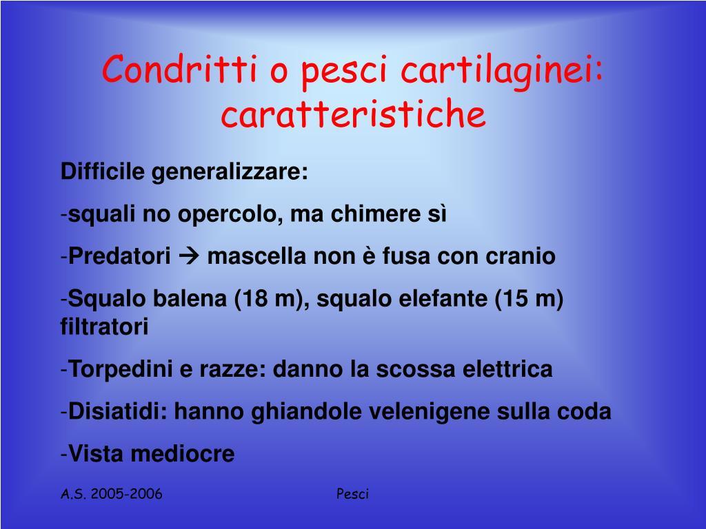 Condritti o pesci cartilaginei: caratteristiche
