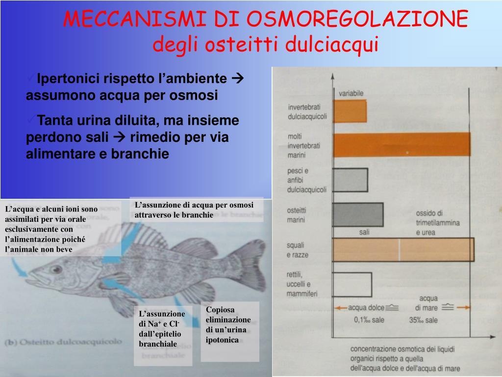 MECCANISMI DI OSMOREGOLAZIONE