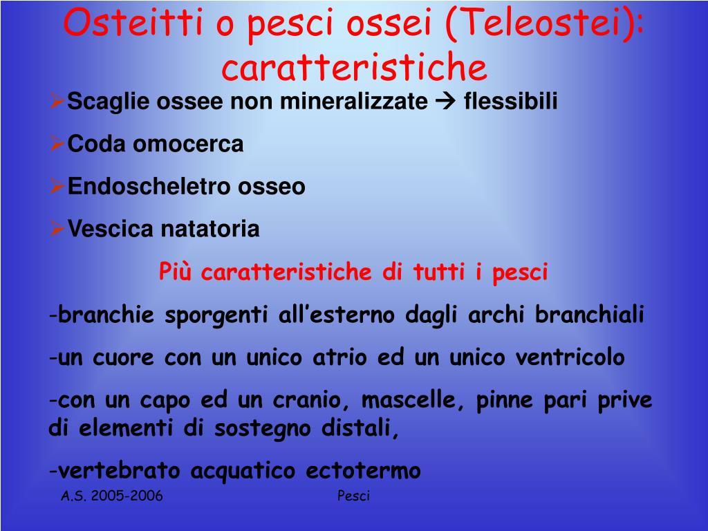 Osteitti o pesci ossei (Teleostei): caratteristiche
