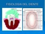 fisiologia del diente