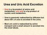 urea and uric acid excretion