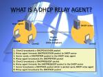 what is a dhcp relay agent
