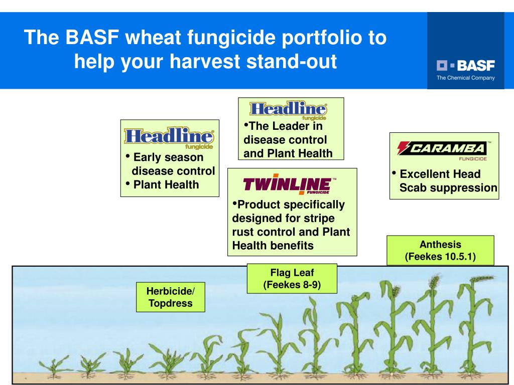 PPT - and fungicides from BASF registered for cereals