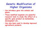 genetic modification of higher organisms