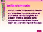red algae information