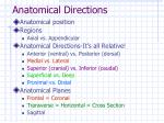 anatomical directions