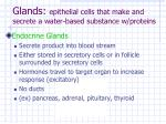 glands epithelial cells that make and secrete a water based substance w proteins16