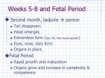 weeks 5 8 and fetal period