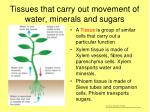 tissues that carry out movement of water minerals and sugars
