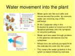 water movement into the plant