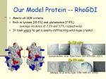 our model protein rhogdi