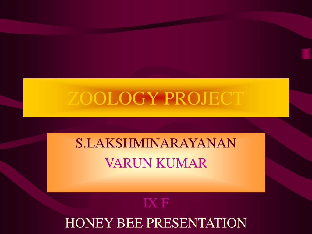 zoology project l.