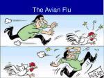 the avian flu