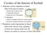 cavities of the interior of eyeball