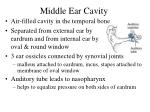 middle ear cavity31