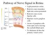 pathway of nerve signal in retina