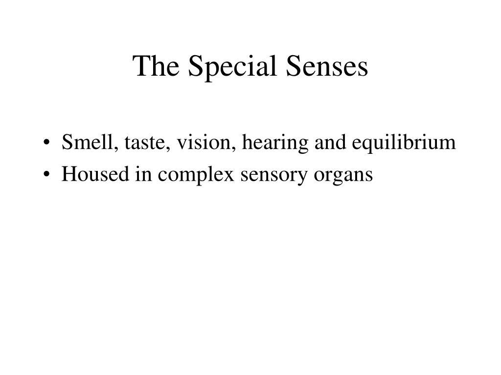 the special senses l.