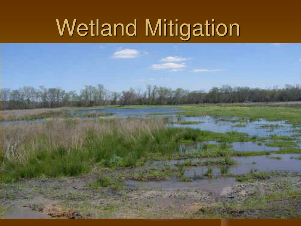 wetland mitigation l.