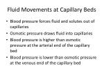 fluid movements at capillary beds