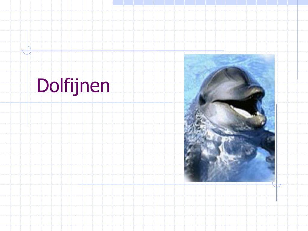 dolfijnen l.
