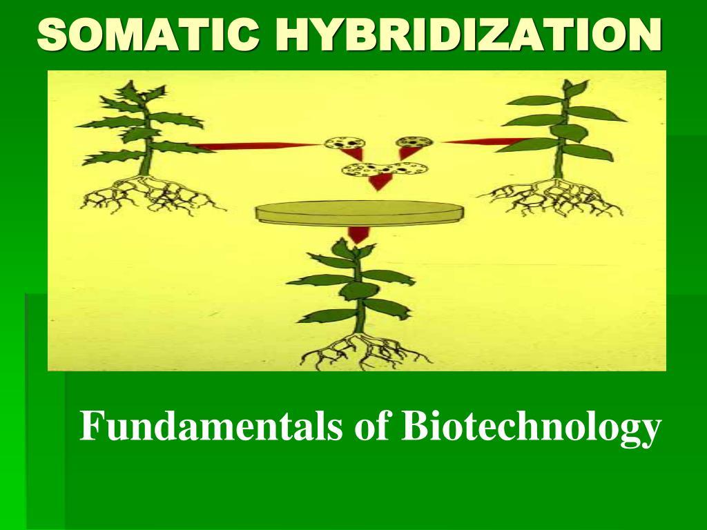 Somatic hybridization).