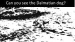 can you see the dalmatian dog