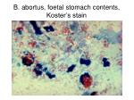 b abortus foetal stomach contents koster s stain