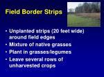 field border strips