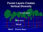 forest layers creates vertical diversity