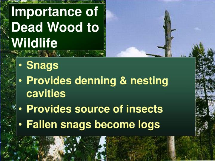Importance of Dead Wood to Wildlife