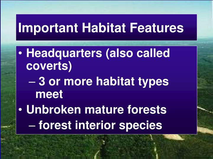 Important Habitat Features