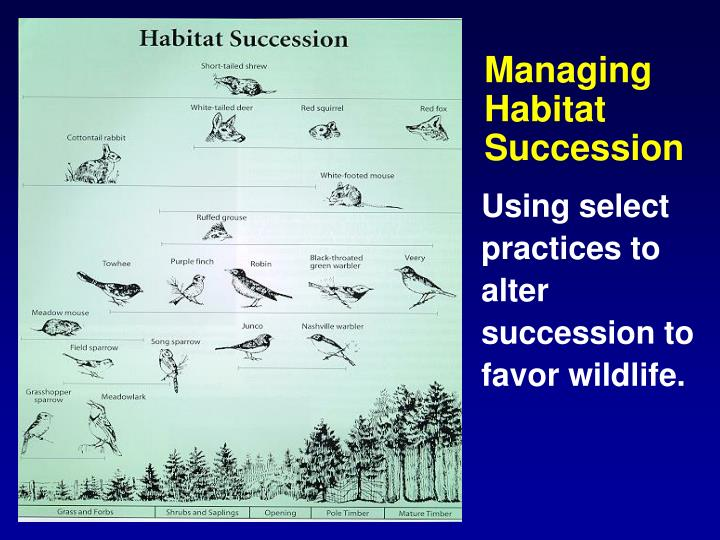 Managing Habitat Succession
