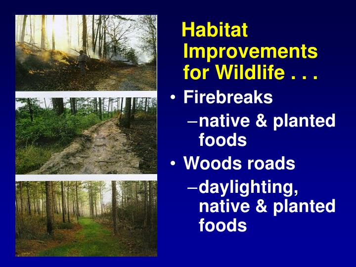 Habitat Improvements for Wildlife . . .