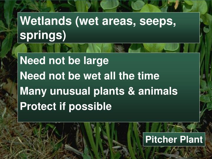 Wetlands (wet areas, seeps, springs)