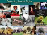 defending animal rights