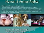 human animal rights15