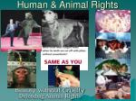 human animal rights16
