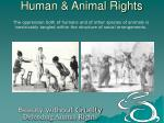 human animal rights4