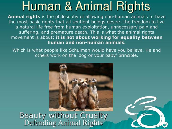nonhuman animal rights essay Animal rights essay animal rights is the idea that nonhuman animals are entitled to the possession of their own lives and that they should be.