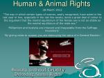 human animal rights7