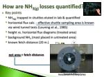 how are nh 3 g losses quantified
