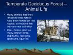 temperate deciduous forest animal life