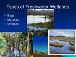 types of freshwater wetlands