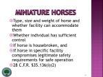 miniature horses16