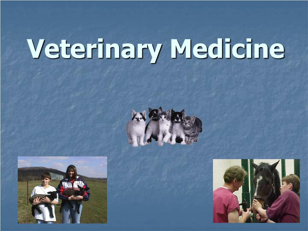 veterinary medicine l.