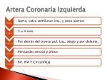 artera coronaria izquierda