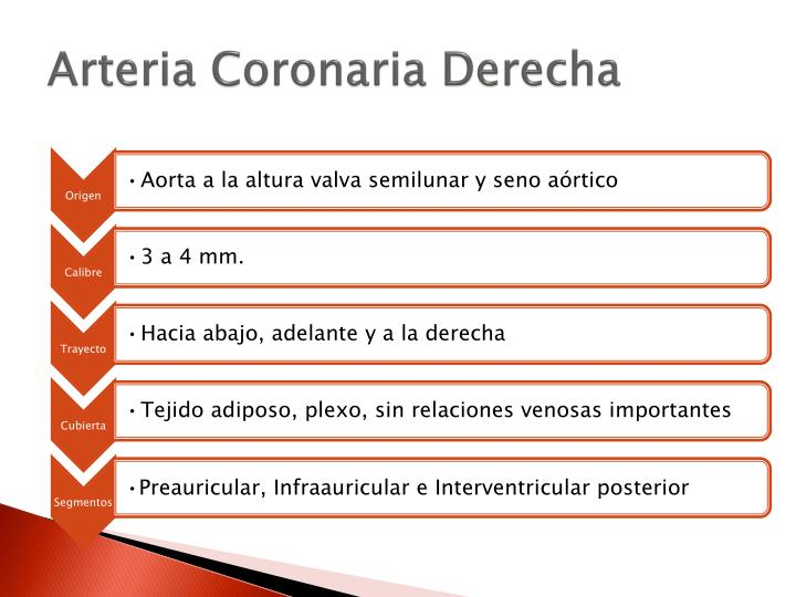 PPT - Arterias coronarias PowerPoint Presentation - ID:784711