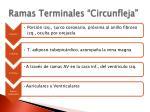 ramas terminales circunfleja
