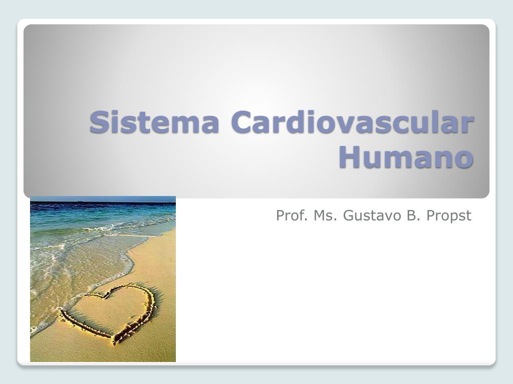 sistema cardiovascular humano l.